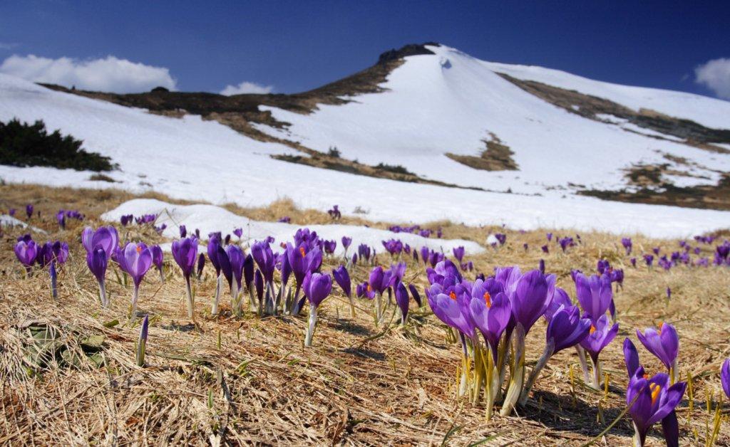Карпати засипало снігом в червні: вражаючі фото