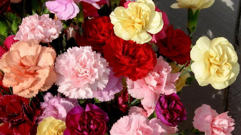 Какие цветы нельзя дарить на 8 марта