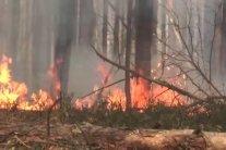 Підпали українських лісів: Нацгвардія почала антидиверсійну операцію