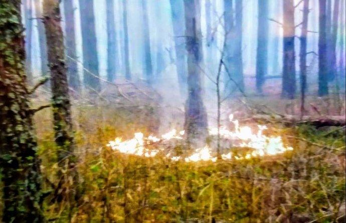 Поджоги украинских лесов: Нацгвардия начала антидиверсионную операцию