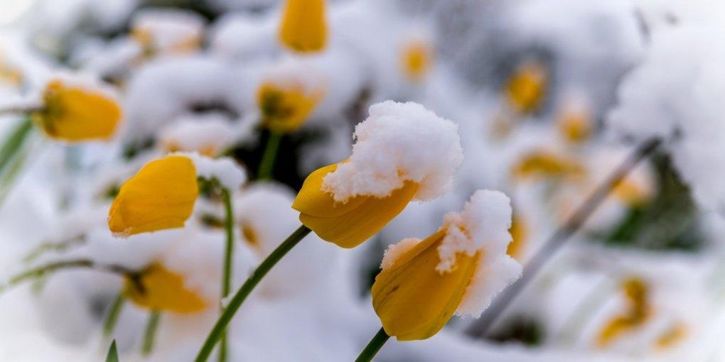 Дощі і сонце: якою буде погода в останні вихідні зими в Україні
