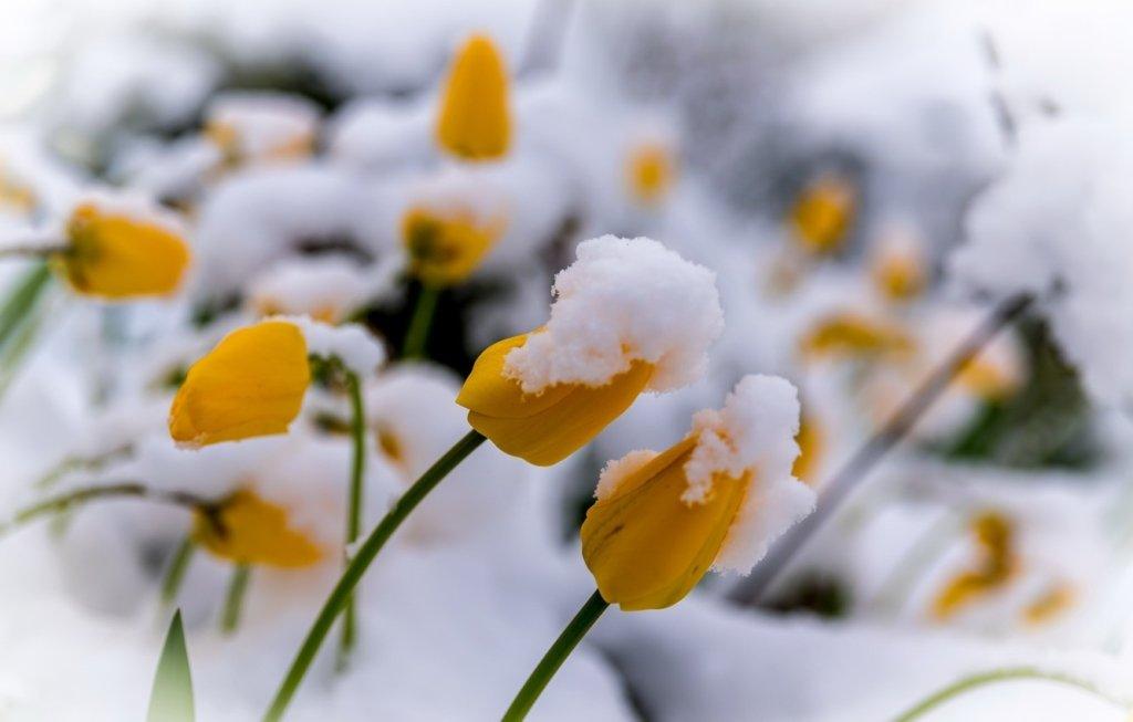 Під Києвом випав сніг: синоптик цікаво пояснив погодну аномалію
