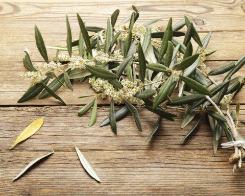 Медики назвали чай, який має цілющі властивості для зниження тиску