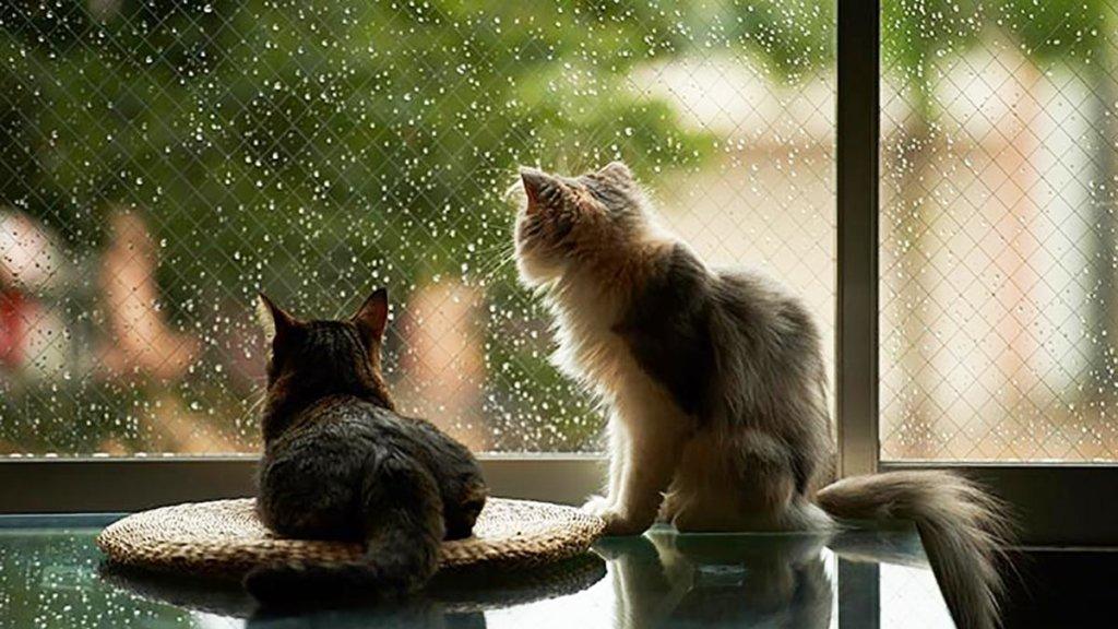 Погода в Україні: сьогодні очікуються дощі та похолодання
