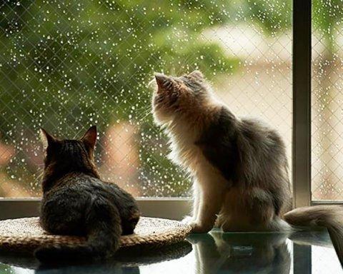 Украину зальют дожди: кому сегодня не повезет с погодой
