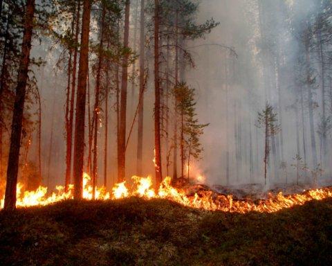 Лесные пожары на Житомирщине: спасатели показали впечатляющее видео