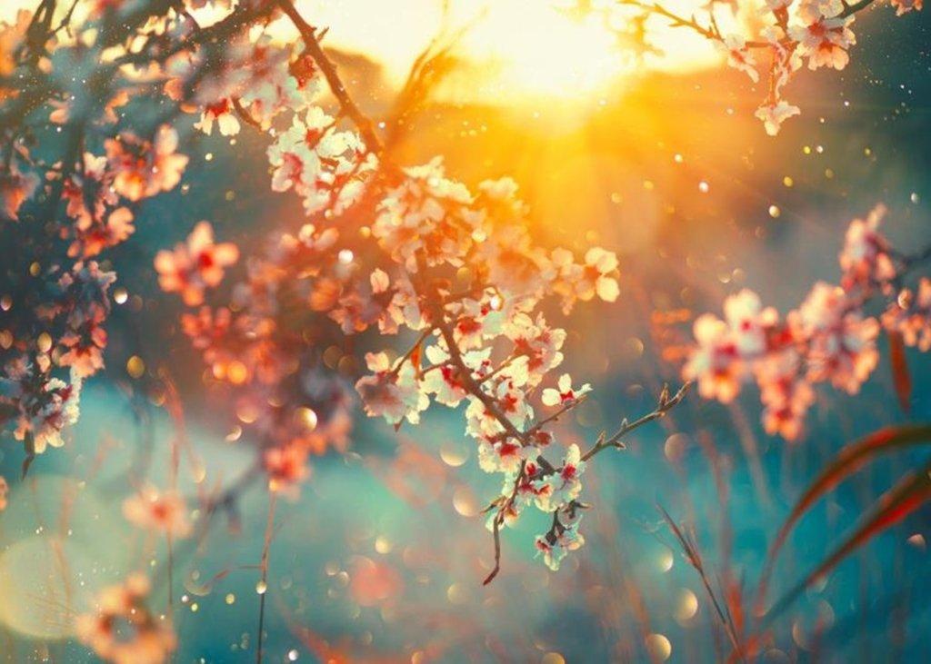 Свята та пам'ятні дати квітня: що відзначається