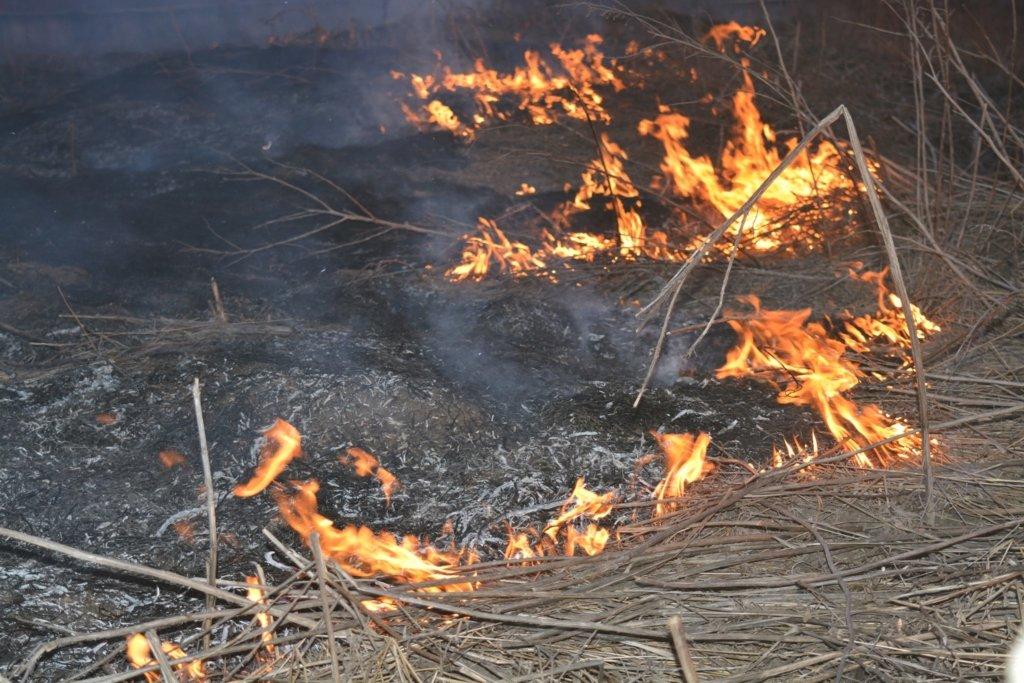 Тушение пожара в Чернобыльской зоне завершено: Аваков