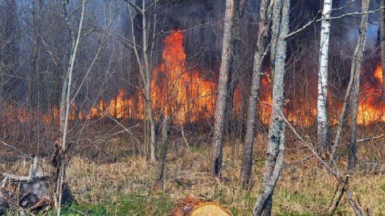 Пожежа в Чорнобилі: з'явилося моторошне відео
