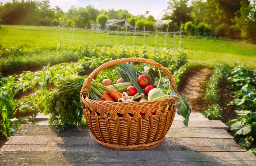 Лунный календарь садовода: что и когда сажать