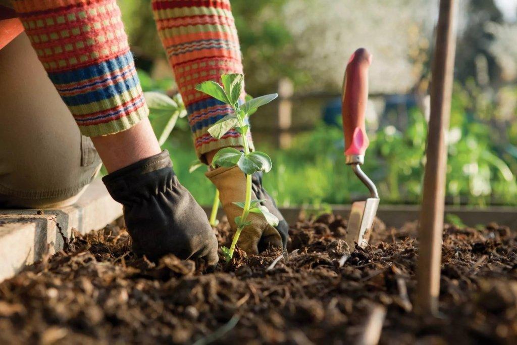 Лунный посевной календарь на июнь: когда лучше высаживать овощи и зелень
