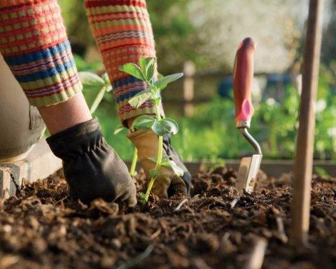 Місячний посівний календар на червень: коли найкраще висаджувати овочі та зелень