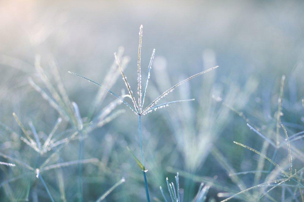 Штормовий вітер і мокрий сніг: кому завтра не пощастить із погодою