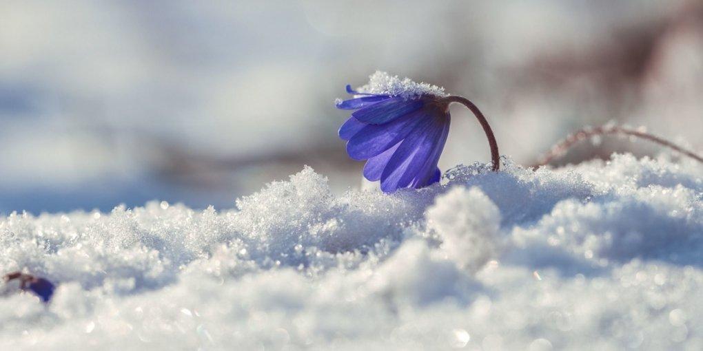 16 тепла и снег с дождями: прогноз погоды на 5 марта в Украине