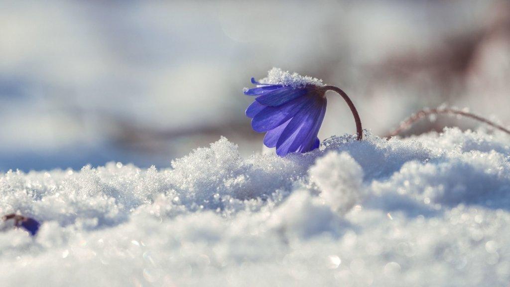Весна затримається: синоптики озвучили детальний прогноз на лютий
