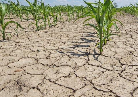 Почнеться посуха: синоптик дав прогноз погоди на травень по тижням