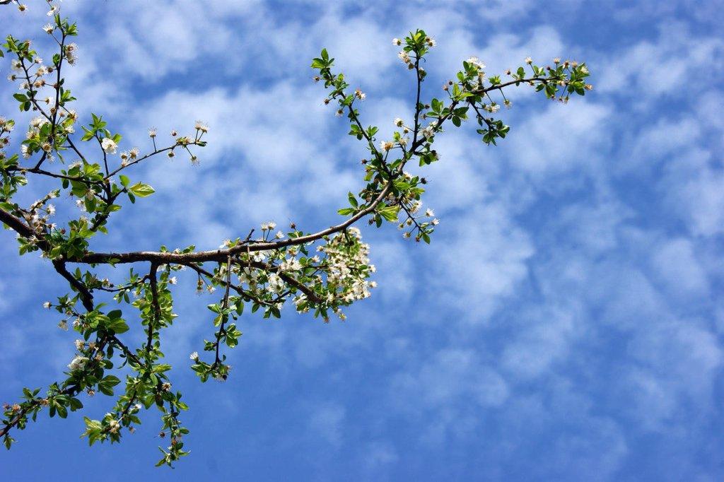 Весни майже не буде: синоптики дали детальний прогноз погоди до літа