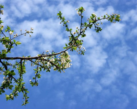 До 5 мороза: синоптики озадачили прогнозом погоды