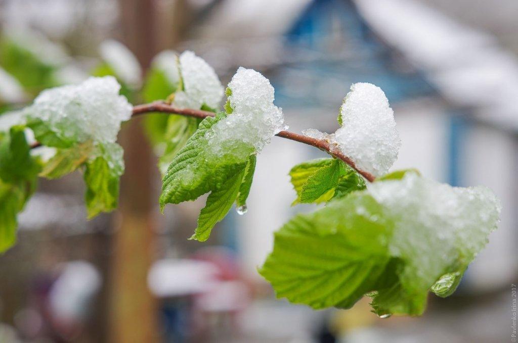 Під Києвом раптово випав сніг: вражаючі кадри