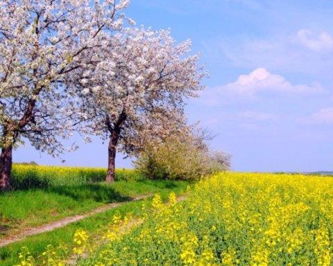 День Івана-воїна: що треба зробити в цей день і що категорично заборонено