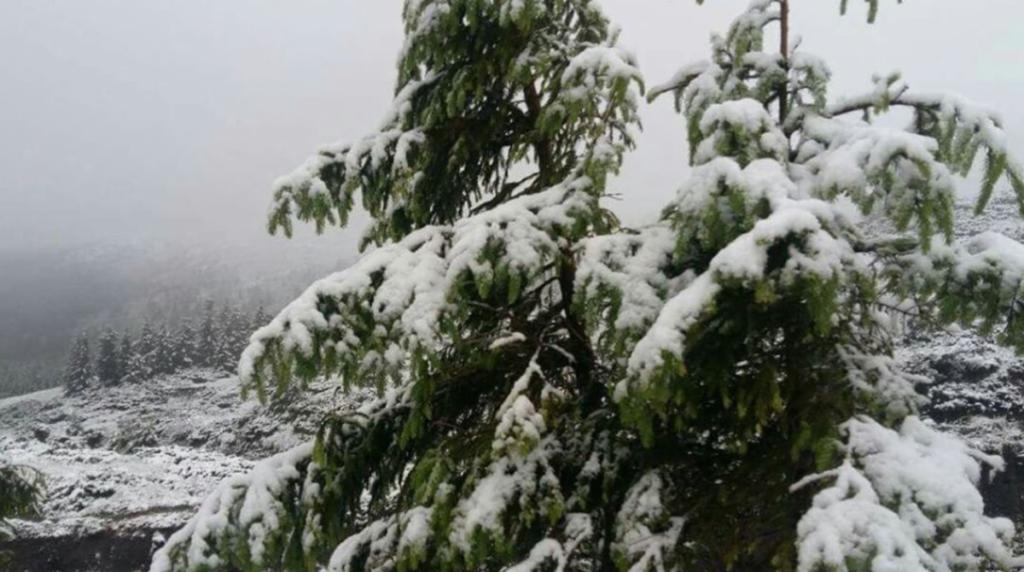 В последний день весны Карпаты засыпало снегом: впечатляющие кадры