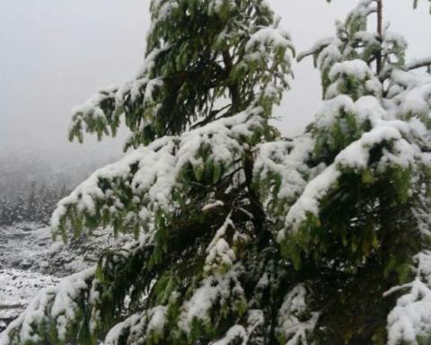 В останній день весни Карпати засипало снігом: вражаючі кадри