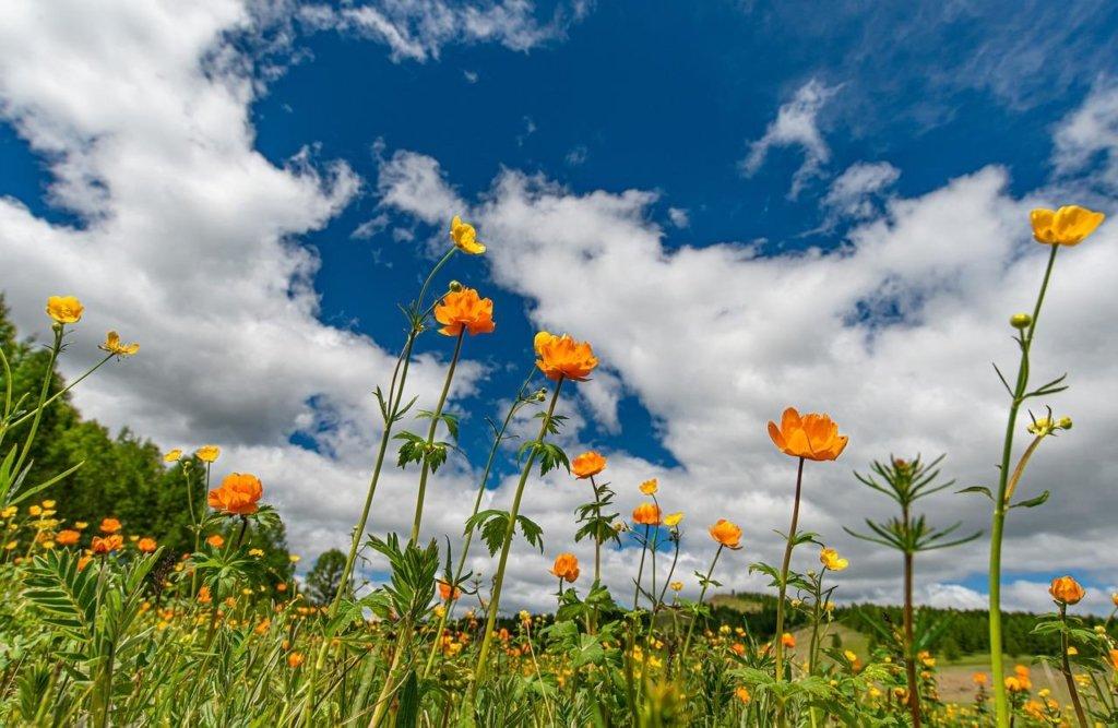 Спека починає спадати: синоптик потішила прогнозом на 8 липня