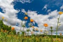 Жара вернется через неделю: синоптик обновил прогноз погоды на июнь