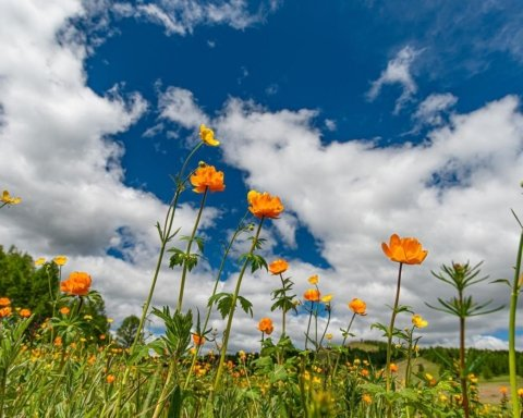 В Україну увірветься літня спека: прогноз погоди на 6 червня