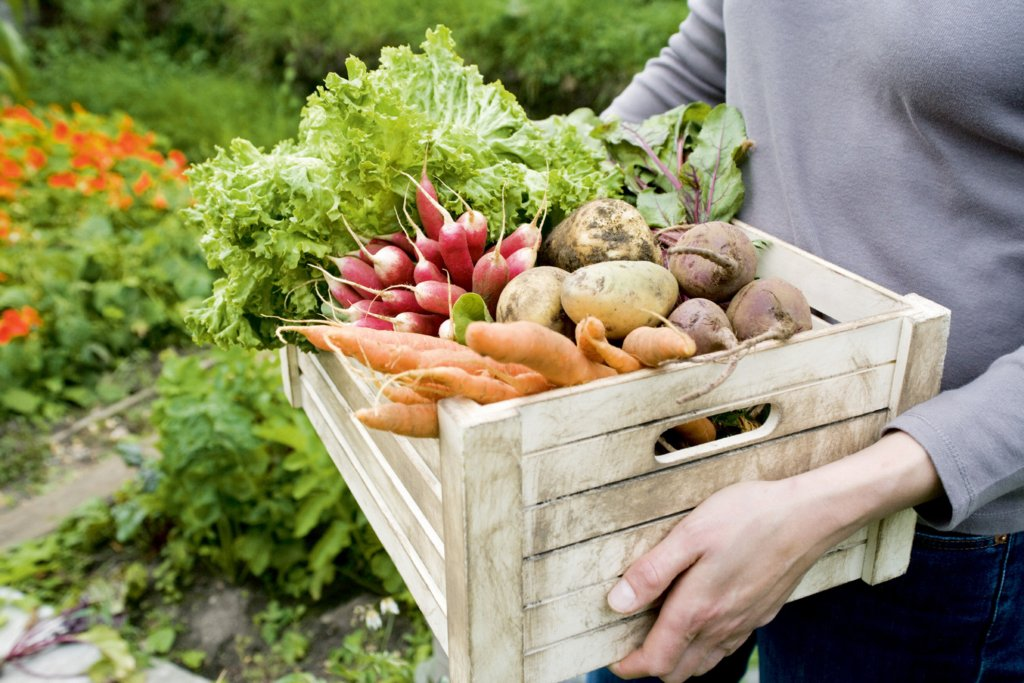 Лунный посевной календарь на июль: благоприятные и неблагоприятные дни для работы в саду