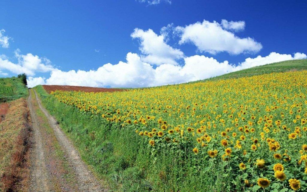 Справжнє літо прийде у липні: синоптик дав чіткий прогноз