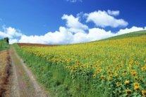 В Україну йде справжня спека: синоптик потішила прогнозом погоди