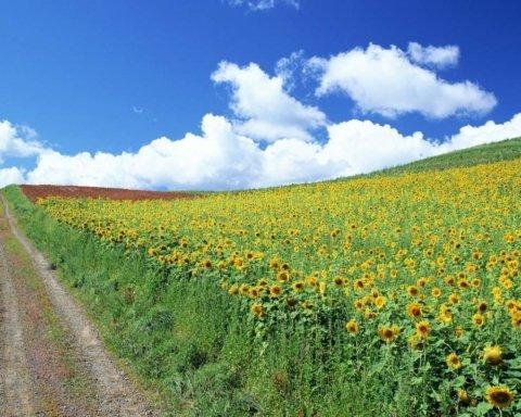 В Украину идет настоящая жара: синоптик порадовала прогнозом погоды