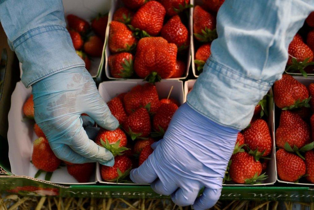 Цены на клубнику в Украине упали в два раза: сколько стоят ягоды