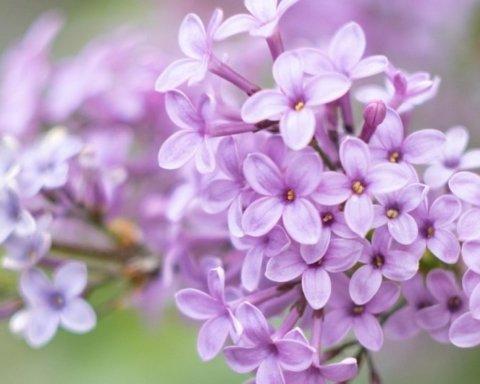 Погода в мае: Укргидрометцентр дал детальный прогноз