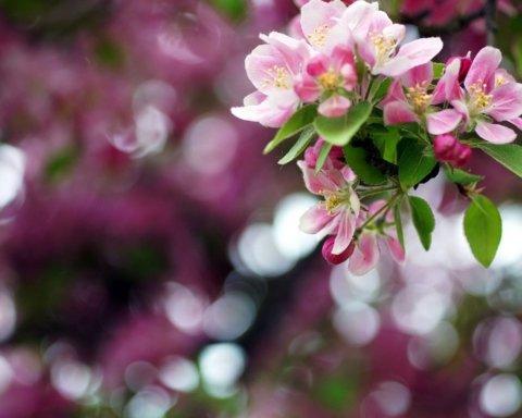 Украинцам обещают заморозки и дожди: прогноз погоды на 21 мая