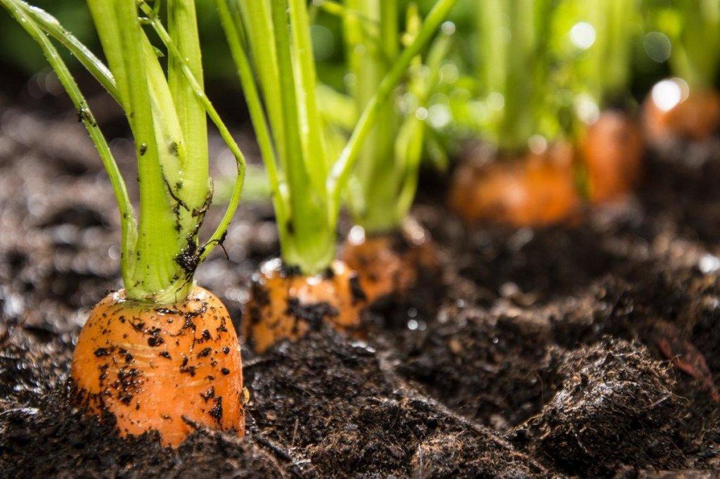 Что и когда сажать на огороде: народные приметы