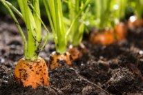 Что и когда сажать на огороде: природные приметы