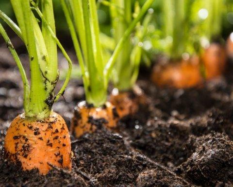 Що і коли садити на городі: природні прикмети