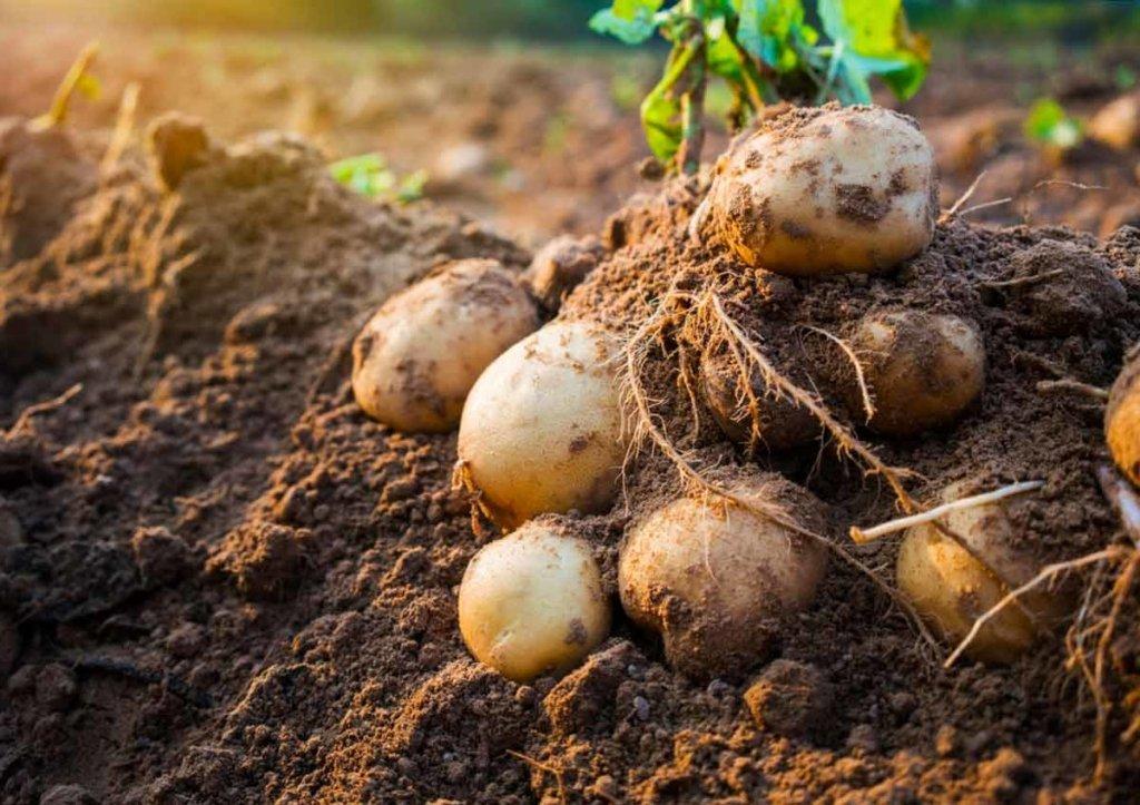 Посівний календар на червень: календар сприятливих днів для вирощування овочів