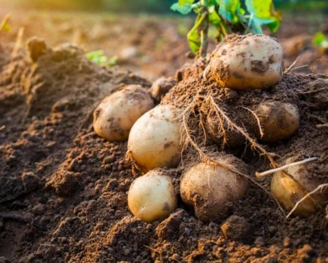 Пенсіонерів, які продають овочі з власних ділянок, хочуть обкласти податком