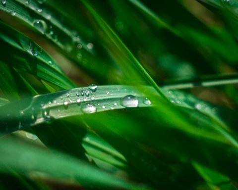 Штормовой ветер и грозы: синоптик озвучила прогноз погоды на выходные