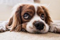 В Україні почали продавати собак за борги: з'явилася обурлива реакція громадян