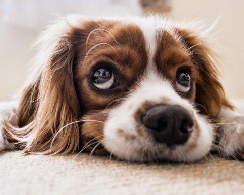 Виявили новий коронавірус, який поширюють собаки: вчені кажуть, переживати не варто