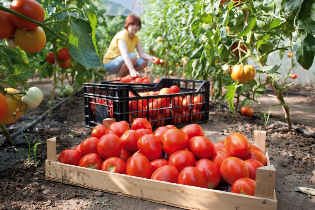 Місячний календар садівника і огородника на червень 2020