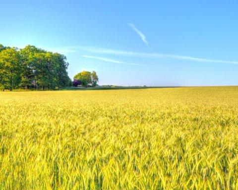 Ринок землі запрацював: як купити ділянку