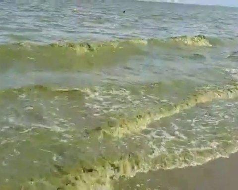 В Николаеве внезапно позеленела вода на пляже: жуткие фото
