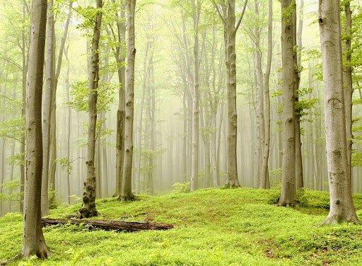 Трійця 2020: чим не можна прикрашати дім на Зелені свята