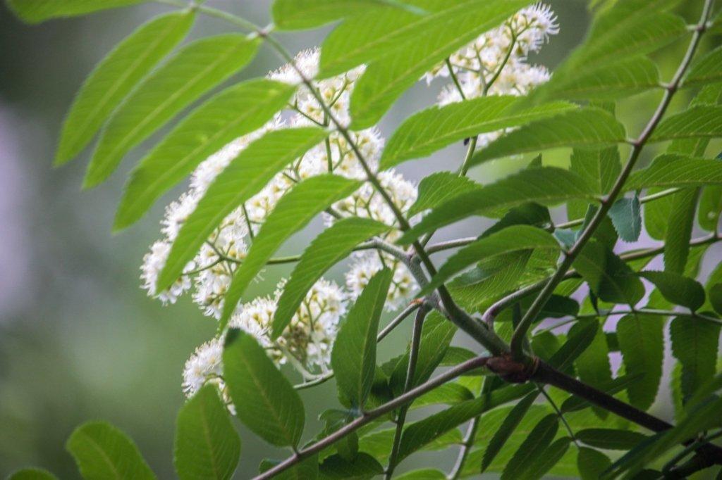 3 июня — День ангела Елены: история праздника и приметы