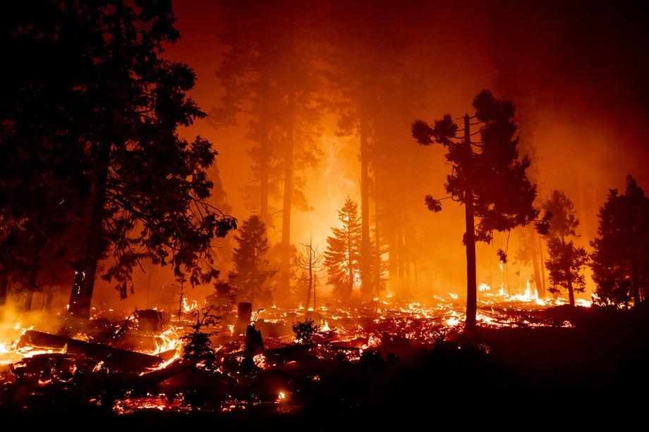В Орегоні лісові пожежі забрали життя десятки людей
